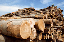 Renewable-Raw-Material-Wood